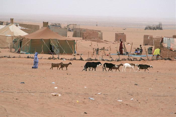 Polisario : le rapport de l'union européenne sur les détournements crée des remous